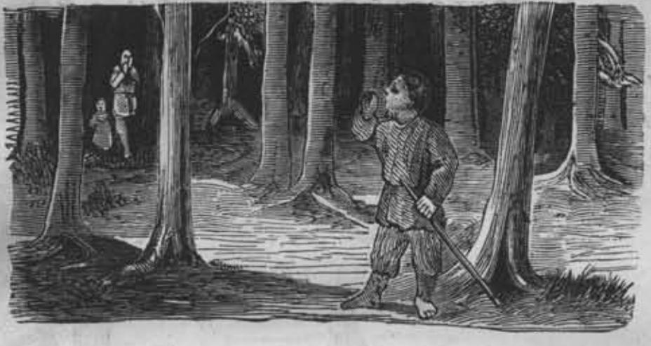 лес, человек, мальчик