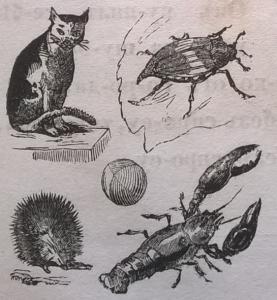 Кот, жук, мяч, еж, рак