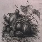 Плоды, блюдо, фрукты, виноград, груша, яблоко, слива