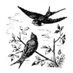 Птица, птицы