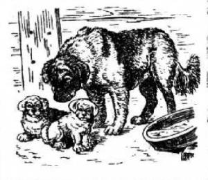 Пес, собака, щенки
