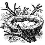 Гнездо, яйца