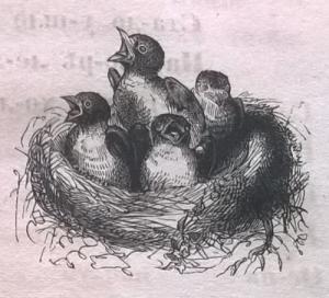 Птенцы, гнездо