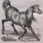Конь, лошадь
