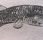 Рыба, щука