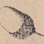 Желудь
