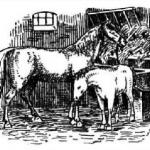 Лошадь, лошади, стойло