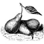 Грушы, груша