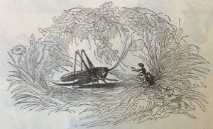 Стрекоза, муравей
