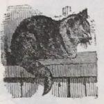 Кот, кошка