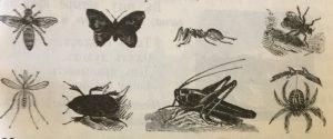 Оса, бабочка, муравей, муха, комар, жук, кузнечик, паук