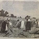 Женщины, поле
