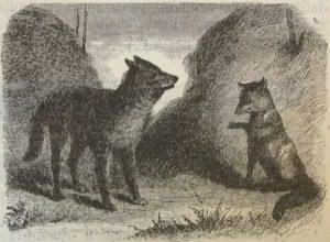 Волк, лиса