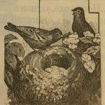 Птицы, птица, гнездо
