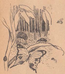 Гриб, растения