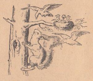 Белка, птица, птицы, птенец, птенцы