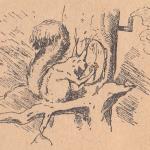 Белка, дерево