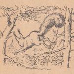 Белка, лес