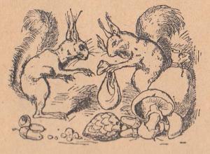 Белка, белки, гриб, шишка