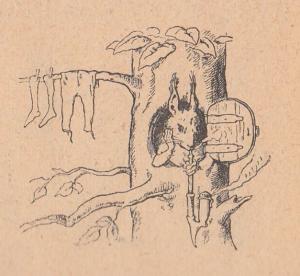 Белка, дерево, одежда